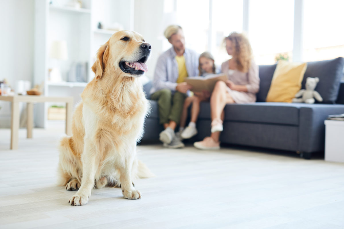 Pet Owner and Selling Your Home? Here Are My Top Tips for Selling Your House When You Have Pets